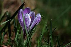Le printemps est proche !