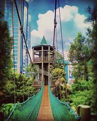 KL Forest Eco Park 8, Jalan Raja Chulan, Bukit Kewangan, 50250 Kuala Lumpur, Wilayah Persekutuan Kuala Lumpur 03-2020 5448 https://goo.gl/maps/ei7UeZFmaYp  #travel #holiday #trip #traveling #Park #garden #tree #Asian #Malaysia #KualaLumpur #travelMalaysia