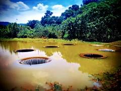 Perigi Tujuh Lorong Kampung Datuk Harun 2, Kampung Datuk Harun, 48200 Serendah, Selangor https://goo.gl/maps/hwN9XrP4QLJ2  #tree #nature #travel #holiday #trip #Asian #Malaysia #Selangor #serendah #travelMalaysia #holidayMalaysia #树木 #旅行 #度假 #亚洲 #马来西亚 #雪兰
