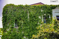 Green House - Tbilisi - Georgia