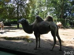 IMG_2664_Burgers_Zoo