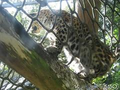IMG_2660_Burgers_Zoo