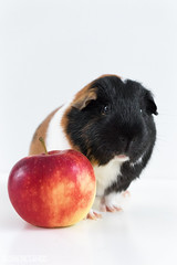 Bowie loves his apple