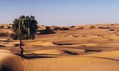 Sharjah Desert iii