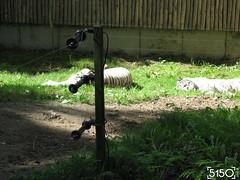IMG_2670_Burgers_Zoo