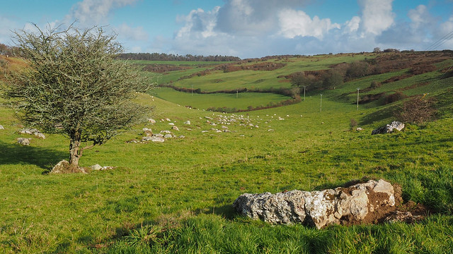 Valley of the Stones + Sheep