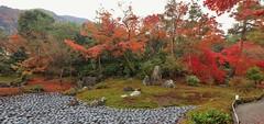 Autumn Landscape Garden - Kyoto Saga Tenryu-ji Temple - Hougon-in Shishikuno-niwa Garden
