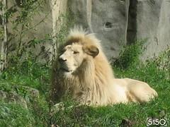 IMG_2511_Burgers_Zoo