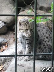 IMG_2657_Burgers_Zoo