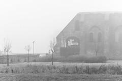 Misty Morning / Koksijde / Ten Bogaerde