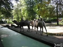IMG_2665_Burgers_Zoo