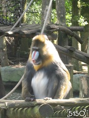 IMG_2517_Burgers_Zoo
