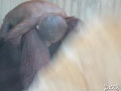 IMG_2639_Burgers_Zoo