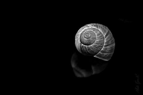 Snail shell / Csigaház