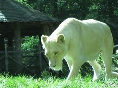 IMG_2698_Burgers_Zoo