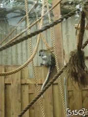 IMG_2626_Burgers_Zoo
