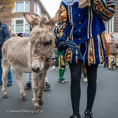 070fotograaf_20181124_Benoordenhout Sinterklaas_FVDL_Stadsfotografie_6615.jpg