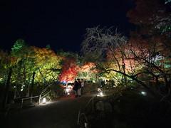 京都 嵐山 天龍寺塔頭 宝厳院 獅子吼の庭【秋の夜間特別拝観】