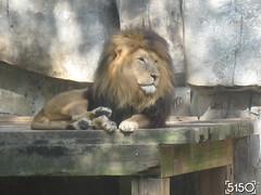 IMG_2506_Burgers_Zoo