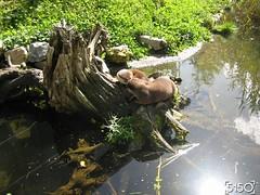 IMG_2615_Burgers_Zoo