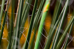 Grass abstract