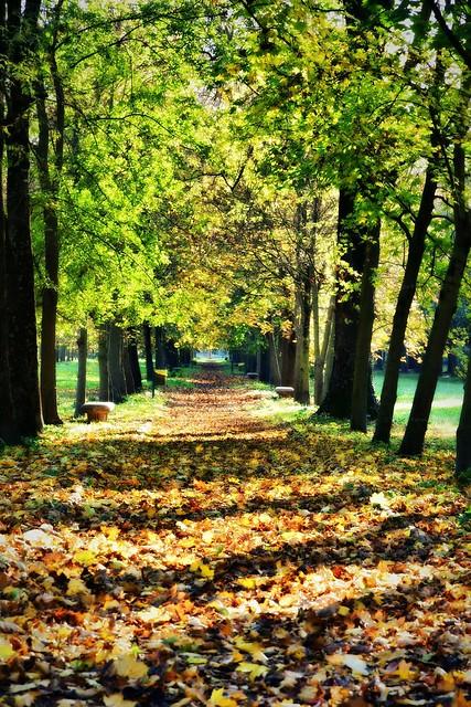 Contrasti d'autunno