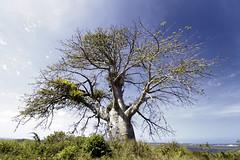 Baobá Porto - Porto de Galinhas por Gustavo Penteado