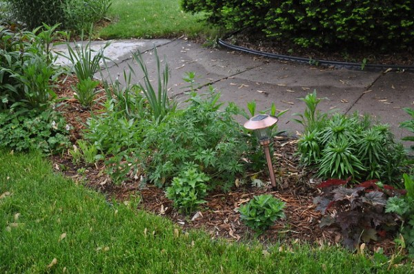 ugly garden