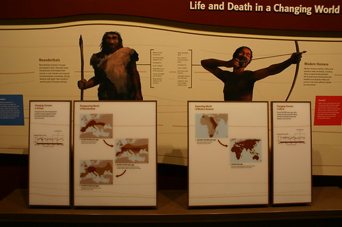 Neaderthals Versus Homo Sapiens