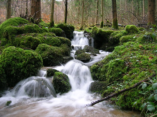 Black Forest Stream in Spring by timeyres