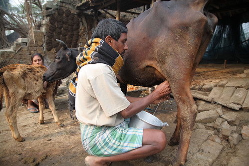 Landless dairy farmer in West Bengal