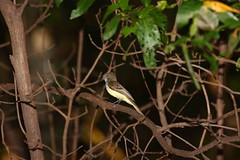 Pantanal Aquidauna – MS