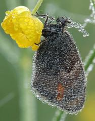 Moth, by Arunas Eismantas