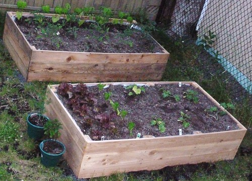 Ideas For Garden Improvement Projects Sprinkler Buddy Blog