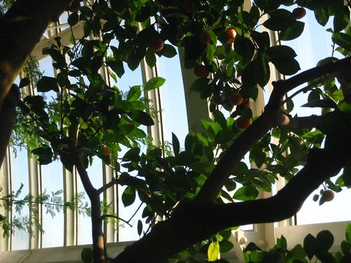 Como Conservatory - 02/12/2010