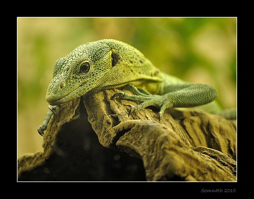 Look Into My Eyes by Somnath Mukherjee Photoghaphy