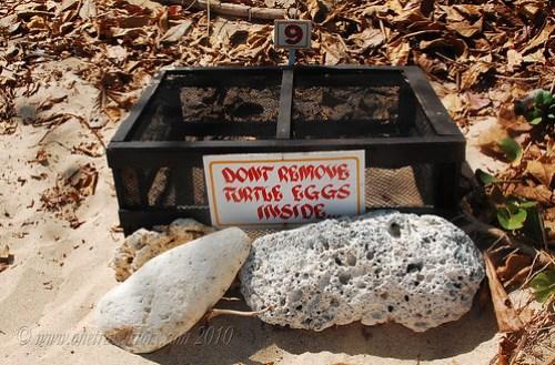 Box 9: Turtle Nest, Helicopter Island, El Nido, Palawan