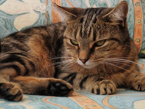 Princess, the cat
