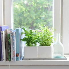 Kitchen Window Box Wallpaper For Backsplash 7 Herbs You Can Grow In Your