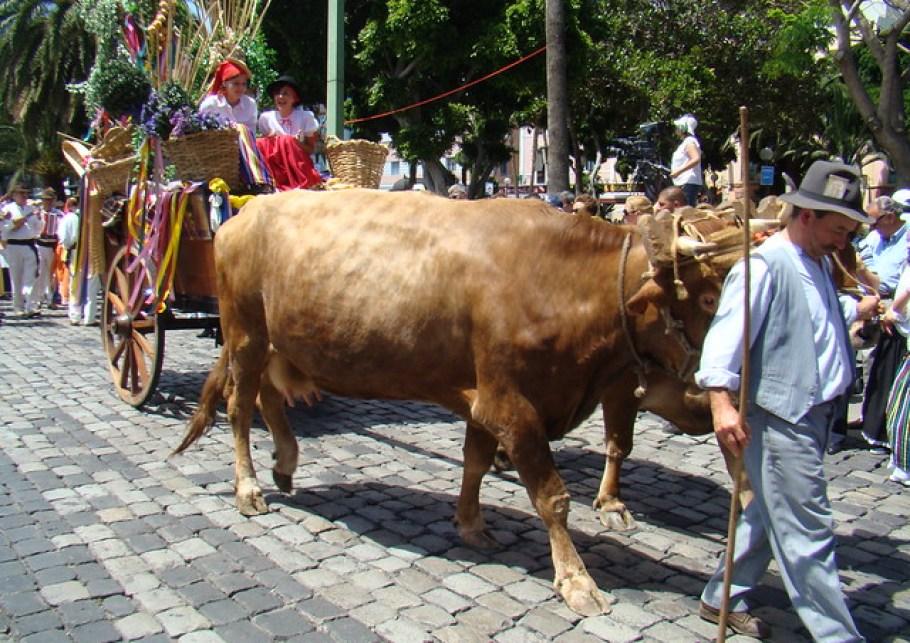 Romeria en Las Palmas de Gran Canaria 2009 14