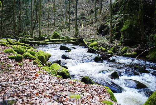 Black Forest iv by satakieli