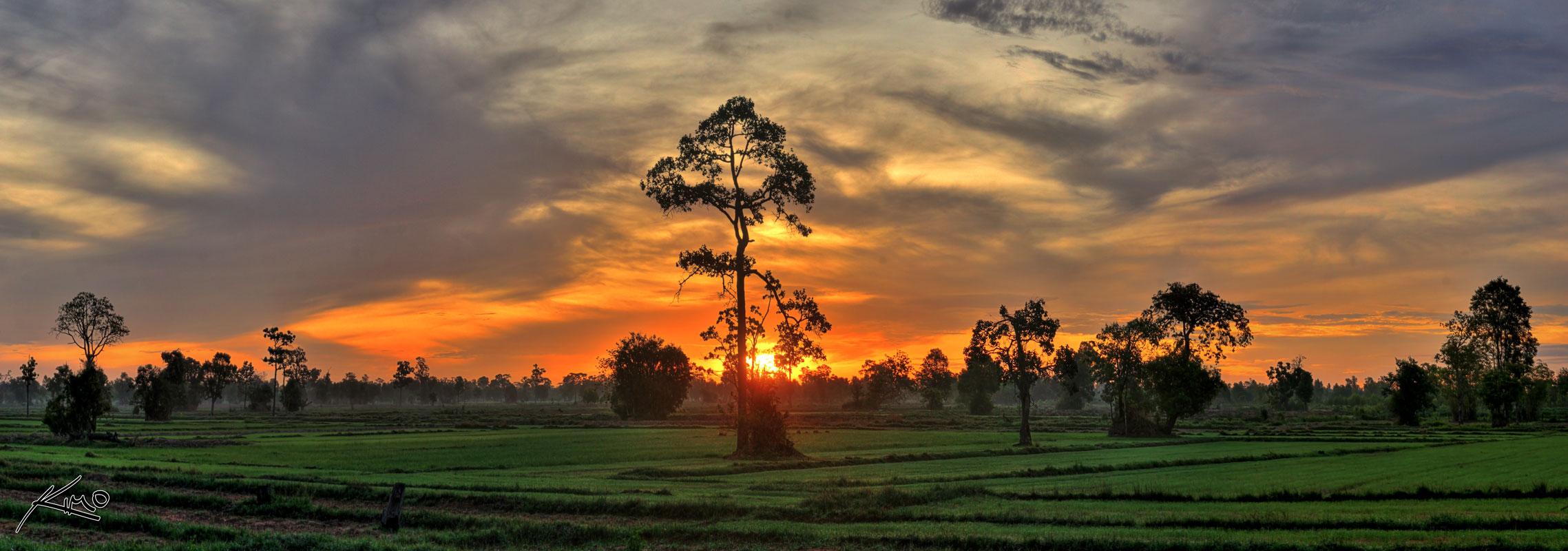Panoramic Hdr Rice Field Sunrise Isan Buriram Thailand