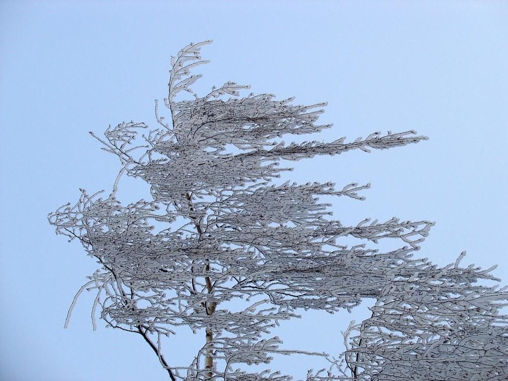 Frozen in the Wind