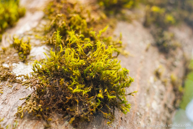 Fuzzy moss clump on rock