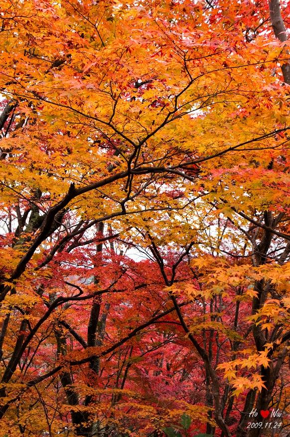 1124_kyoto_1022
