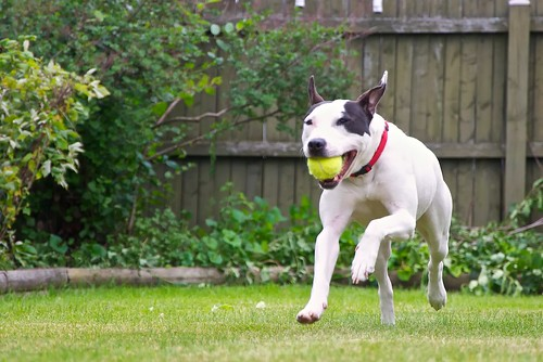Ida playing fetch
