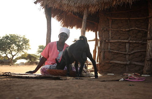 Mozambiquan woman feeds her goat