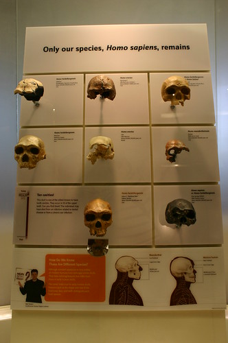 Skulls of our Ancestors