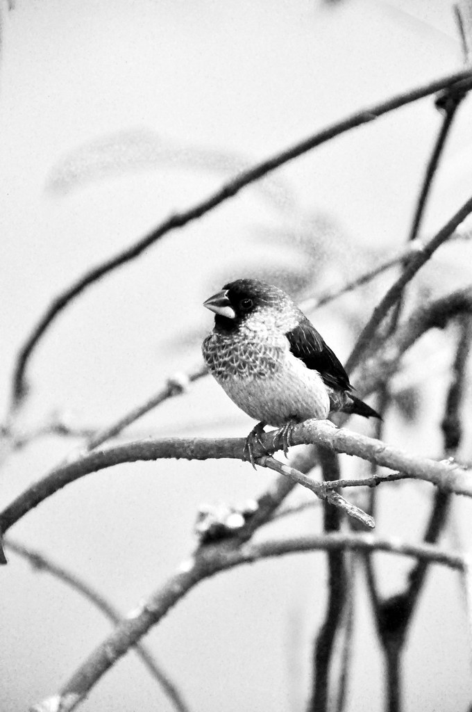Black and White portrait of a bird