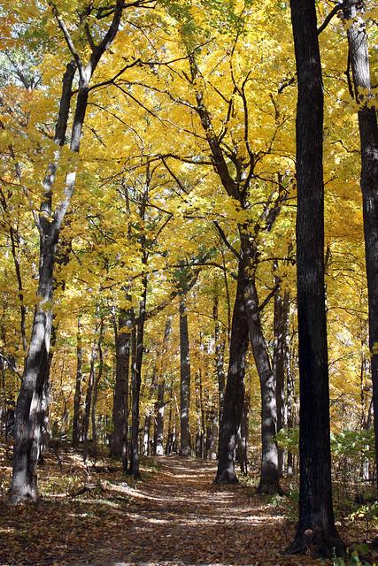 path through yellow trees